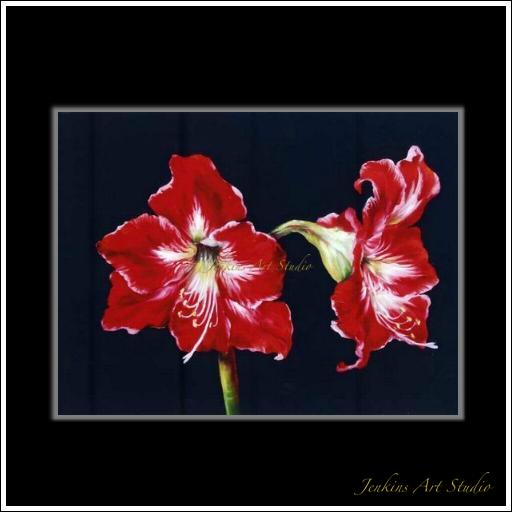 The big red Amaryllis