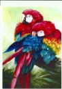 JVIN_Scarlet Macaws